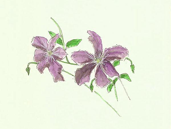 2014-07-12flowers