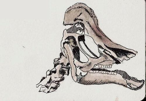 Moleskine watercolor notebook (3x5), Namiki Falcon, Platinum Carbon Black
