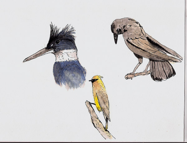 birds at RedPath Museum