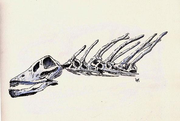 Amargasaurus sp. from Argentina. Huge herbivore (9meters)